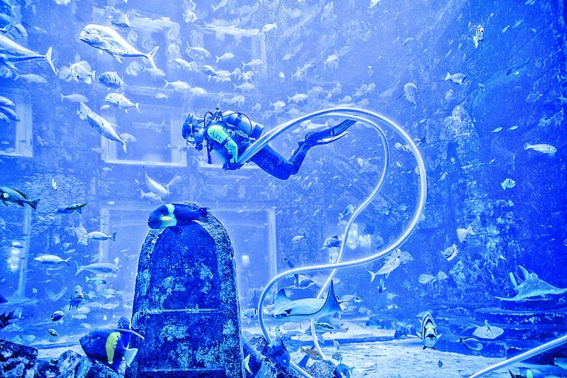 The diver doing a routine check at an aquarium in Hotel Atlantis.