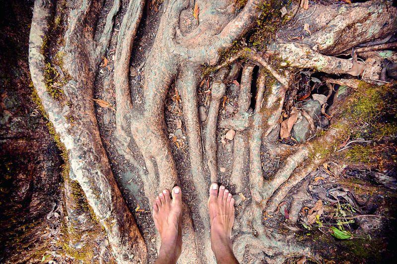 Living root bridges in Meghalaya.