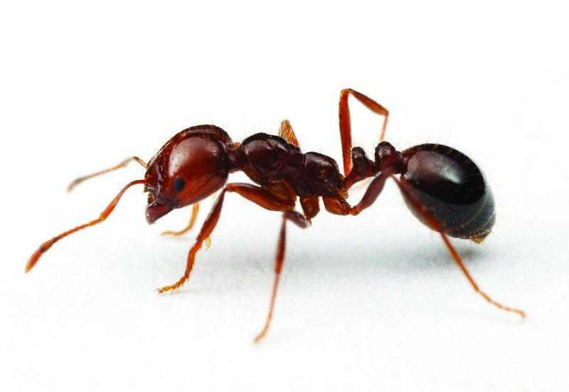 Ants and insects