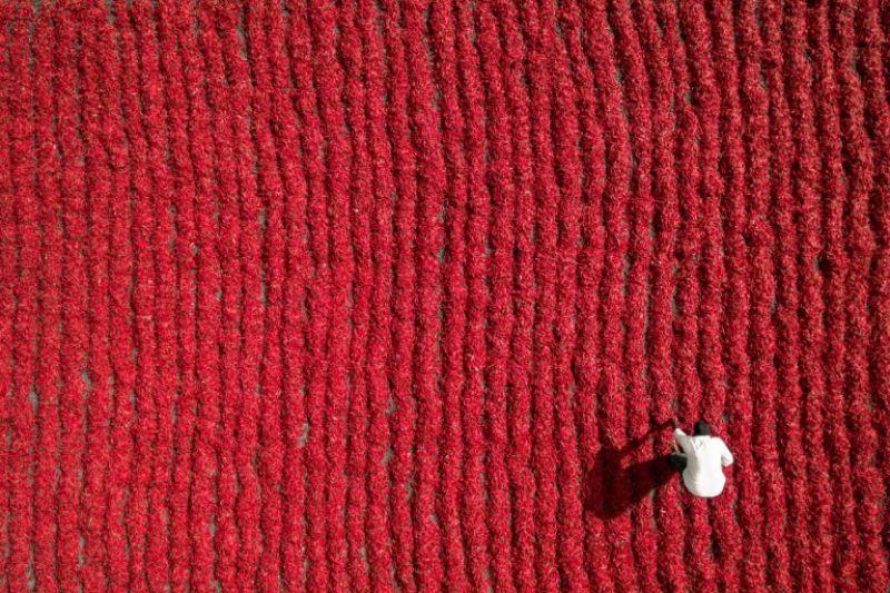 Red Chili Farmer, Guntur, India by Aurobird (Photo Courtesy: Dronestagram)
