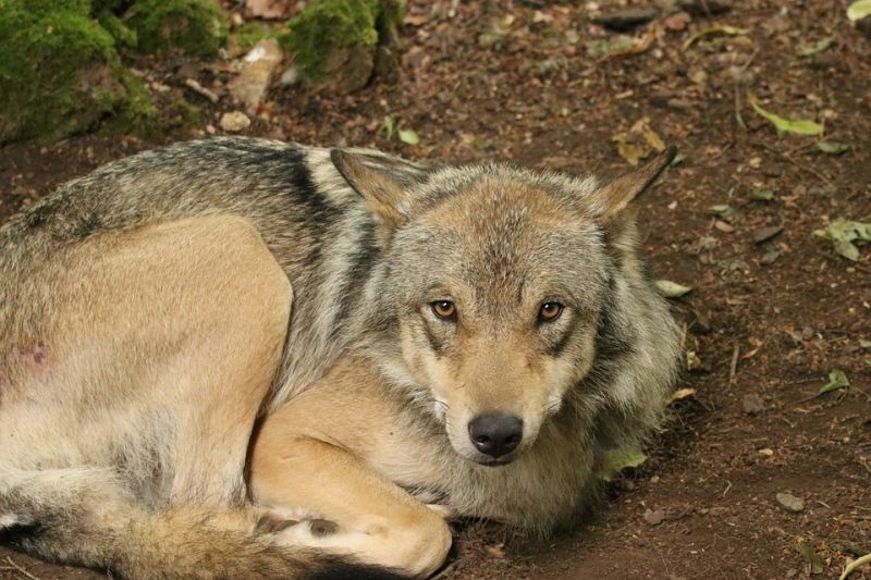 Sandra L. Piovesan was half eaten by her pet wolf-dogs before authorities found her