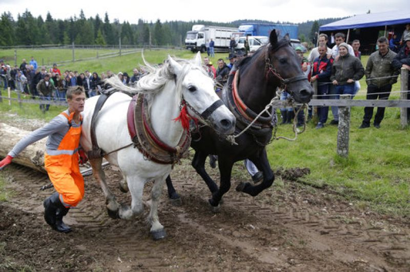 Horses pull logs up a hill during a competition in the town of Sokolac, Bosnia, on Sunday, June 18, 2017. (Photo: AP)