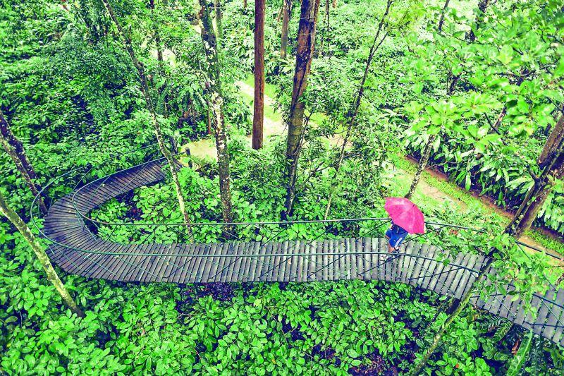 A man walks across a tree house at Pepper Trails estate in Waynad, Kerala.