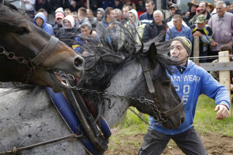 Owners of the horses gather from all over Bosnia and beyond, and compete in a show of horse strength. (Photo: AP)