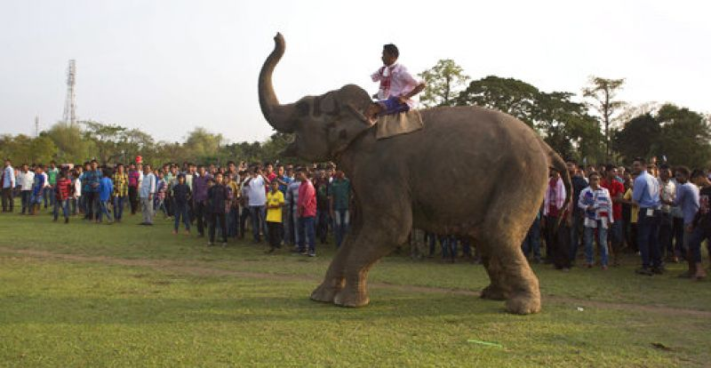 A mahout tries to control an elephant which refused to participate in an elephant fight during the Suwori Tribal festival.  (Photo: AP)