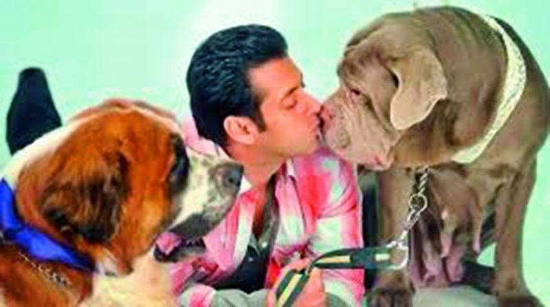 Salman Khan owns Mowgli (Labrador Retriever), Saint (St. Bernard), Mylove (Neapolitan Mastiff), & Veer (French Mastiff, who died).