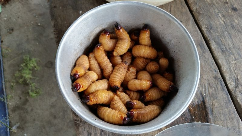 Grubs from Mexico (Representational Image/ Pixabay)