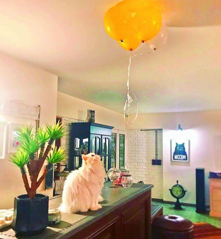Alia Bhatt's cat at her home
