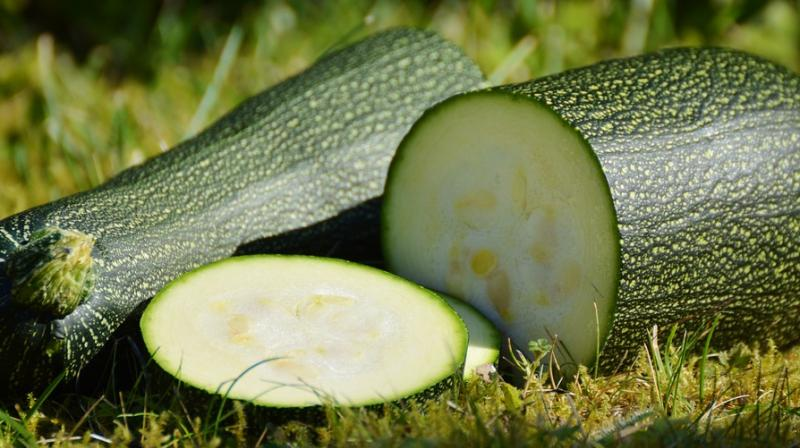 Man calls police after he mistakes zucchini for WWII bomb. (Photo: Pixabay)