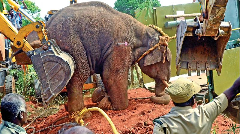 Coimbatore: Elephant tramples four to death in Vellalore area