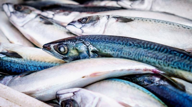 The decline in discards in recent years may be an indicator of depleted fish stocks, researchers say. (Photo: Pixabay)