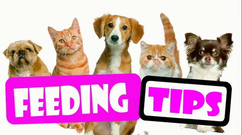 Cooked rice with a non-vegetarian curry or fry, and at times even table scraps are considered good for pets.