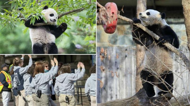 One of Washington's most popular residents left town on Tuesday: Bao Bao, the National Zoo's uber-popular young female panda, headed to her new home in China. (Photo: AP)
