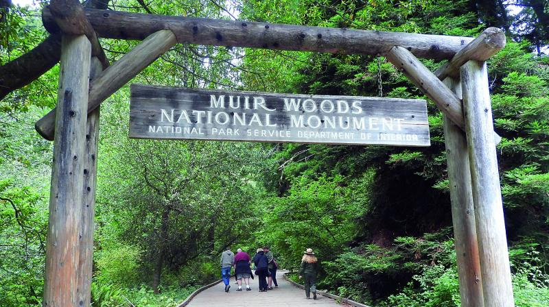 Muir Woods near San Francisco has been a protected National Monument since 1908
