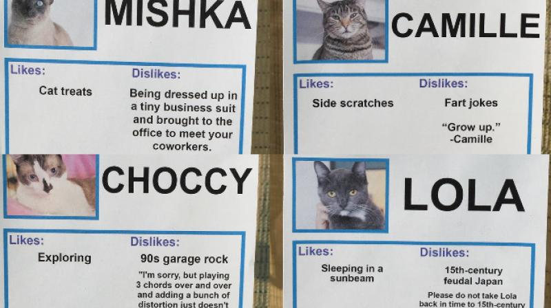 Prankster Obvious Plant stealthily made funny identication cards to encourage people to adopt cats at the Sante D'Or Animal Rescue. (Photo: Facebook/ObviousPlant)