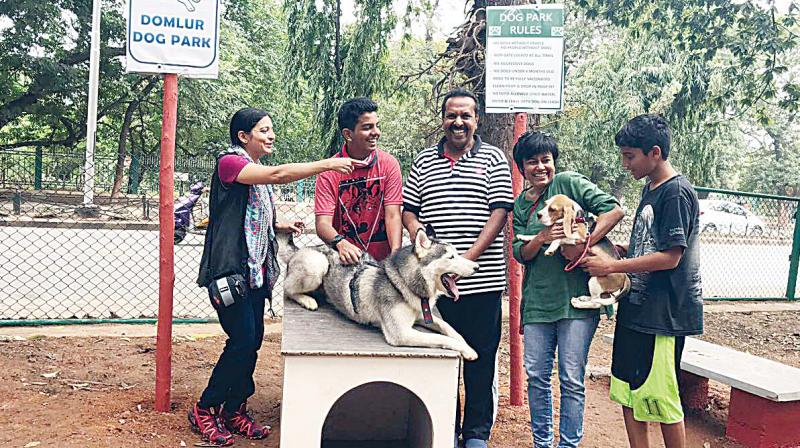 The Domlur Dog park, a haven for all dogs and owners.