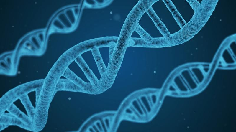In a Major First, Scientists Edit DNA Within the Human Body