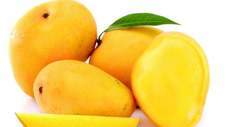 The experiment also showed that mango consumption reduced cholesterol and triglycerides. High levels of these can lead to heart disease.