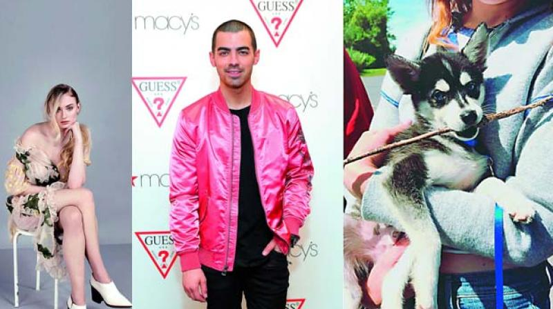 Joe Jonas & Sophie Turner Adopt Adorable Puppy
