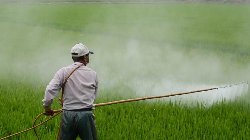 Pesticide could be contributing factor of low pregnancy rates. (Photo: Pixabay)
