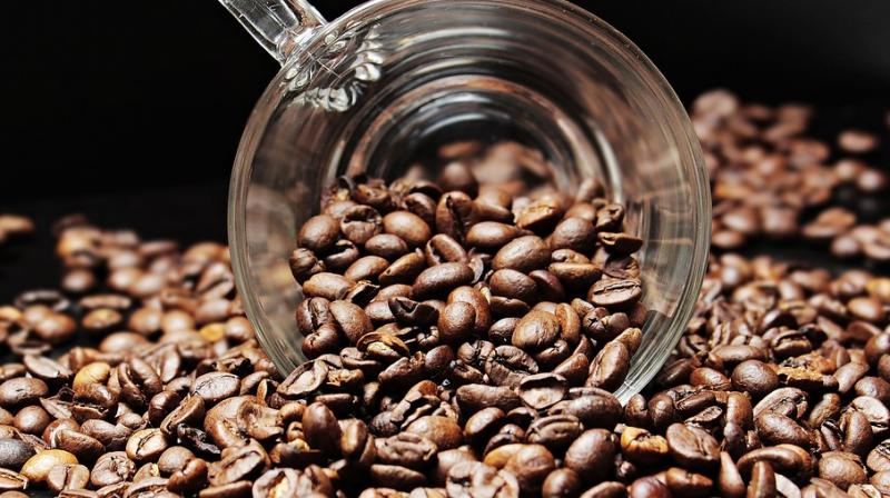 India makes world's most expensive coffee with civet cat poop. (Photo: Pixabay)