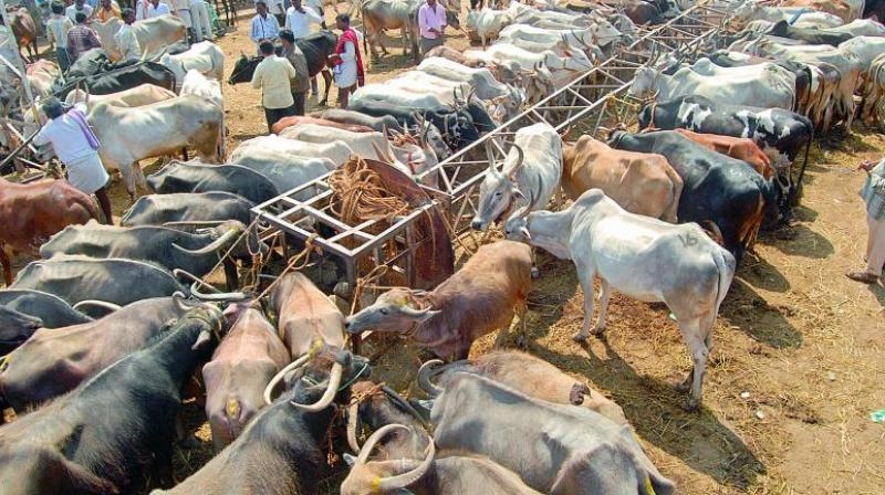 India bans sale of cows for slaughter