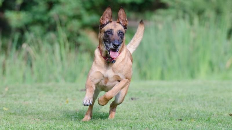 Military dog wins British prize for valour under fire