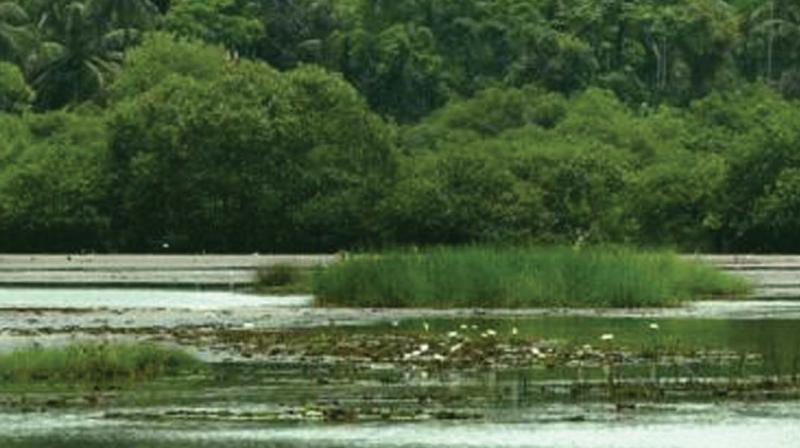 Kerala mangroves