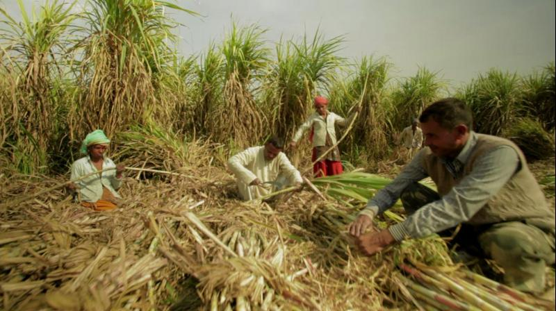 This move is unlikely to have any significant impact on sugar prices or profitability of the sugar mills in the near term.