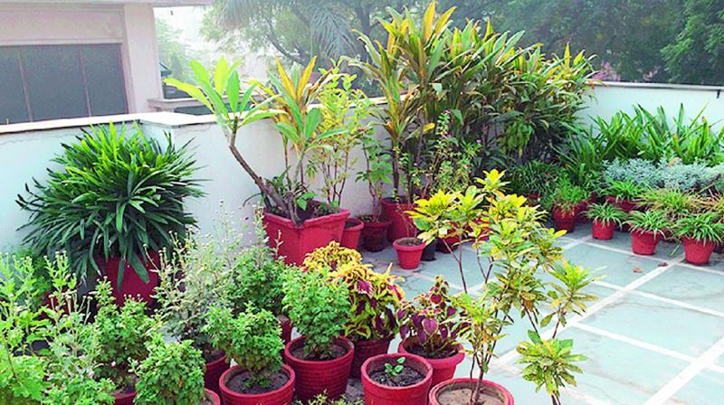 Visakhapatnam terrace garden idea withers away for Terrace 6 indore images
