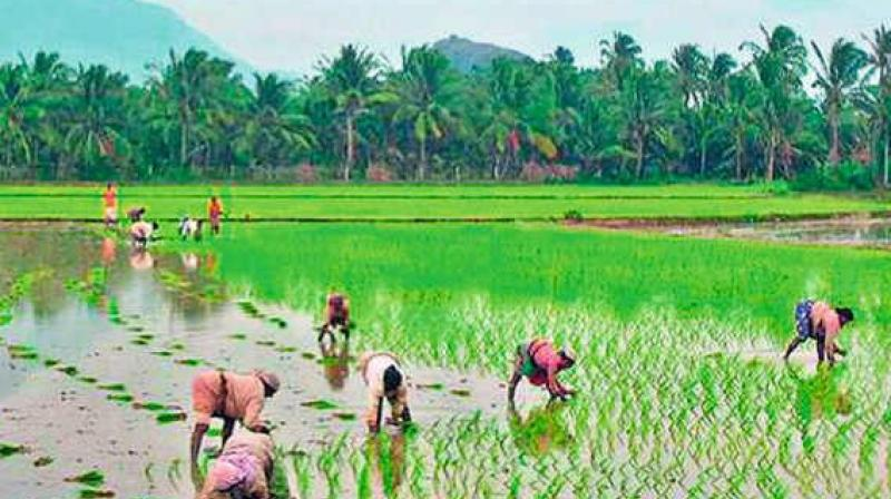Telangana Farmers will get FREE electricity 24/7 from March 2018