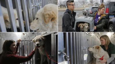 The Humane Society International's Director of Companion Animals and Engagement rescued 48 dogs from a South Korean meat farm recently and have given them new homes. (Photo: AP)