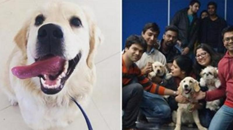 Three friends in Gurgaon decided to tap pet therapy market in Indian by setting up the Fur Ball Story in 2016. (Photo: Facebook)