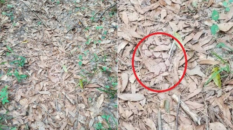 Can you spot the snake in this viral photo?