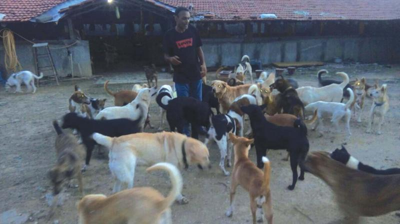 Tony Freer with the rescued dogs
