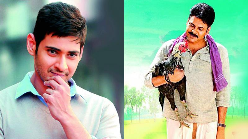 Tollywood Stars Pawan Kalyan, Mahesh Babu Reacts on Jallikattu Ban