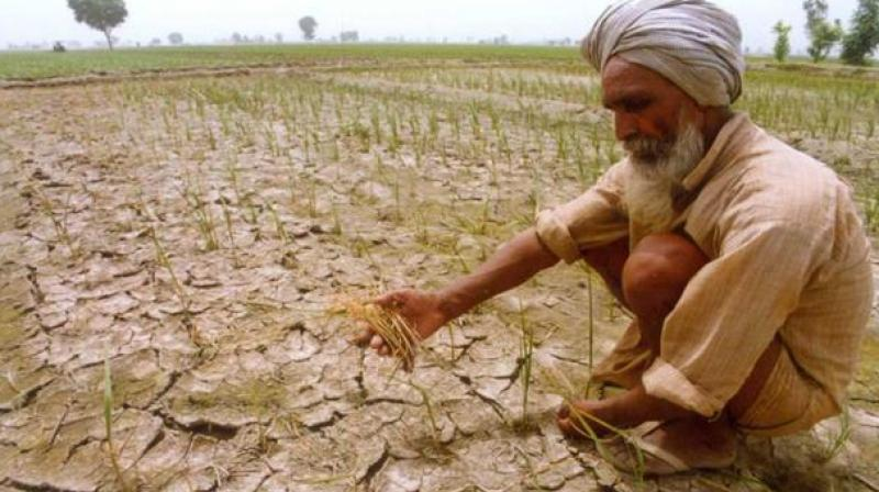 RBI on Thursday said farm loan waivers will lead to a lasting adverse impact on farm productivity. Photo: PTI