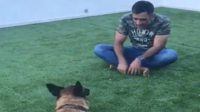 MS Dhoni's pet dog Sam's adorable mirroring talent