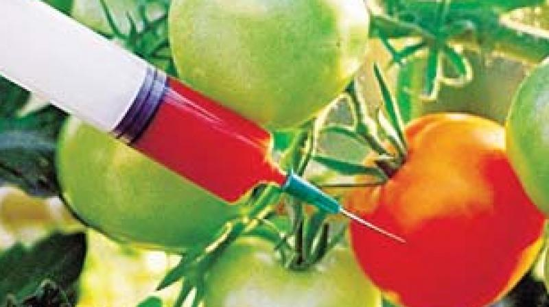 debate on genetically modified food crops Two sides of the gmo debate 11:16  that would make it illegal for states to force food manufacturers to label foods made with genetically modified crops - also called gmos (genetically modified .