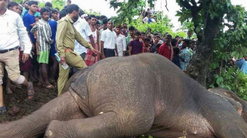 Only licensed elephant hunter Nawab Shafat hired to kill elephant