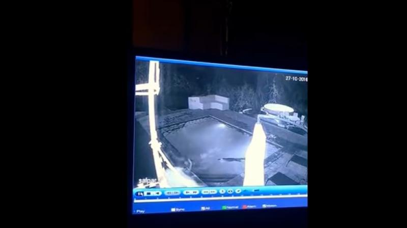 Couple gets nasty surprise when crocodile jumps into pool with them