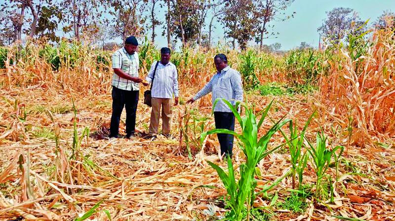 Officials inspect a damaged farm