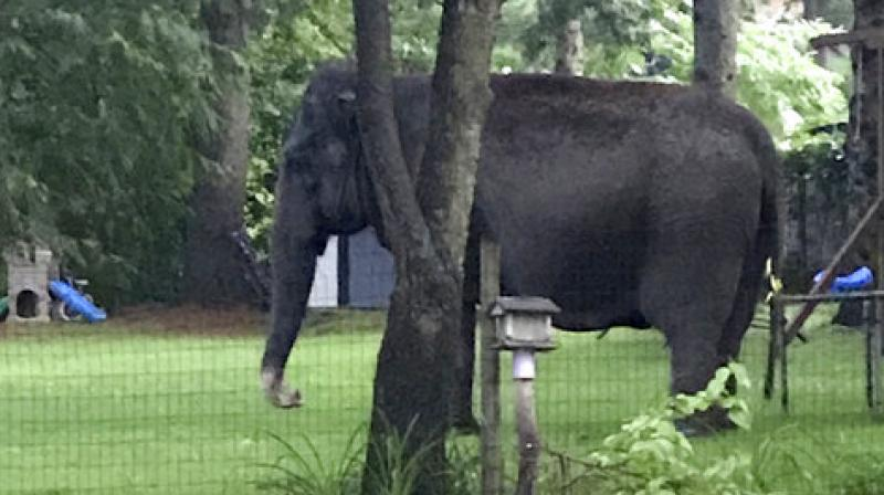 Elephant enters Wisconsin neighborhood, creates quite a stir