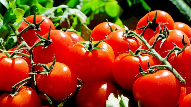 Lycopene, primary carotenoid in tomatoes, has been shown to be most effective antioxidant of the UV pigmentation (Photo: Pixabay)