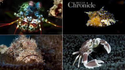 Photographer captures stunning images of creatures that dwell deep inside the sea (Photo: Sumer Verma)