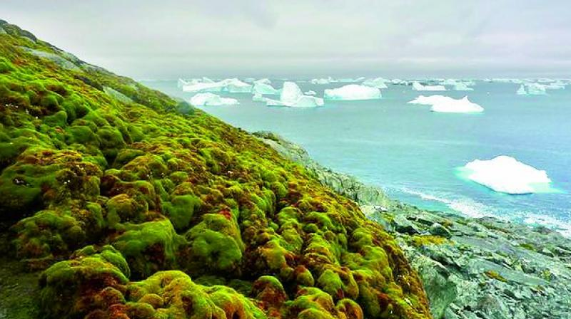 ven  modest future warming could lead to further, rapid changes in Antarctica's ecosystems.
