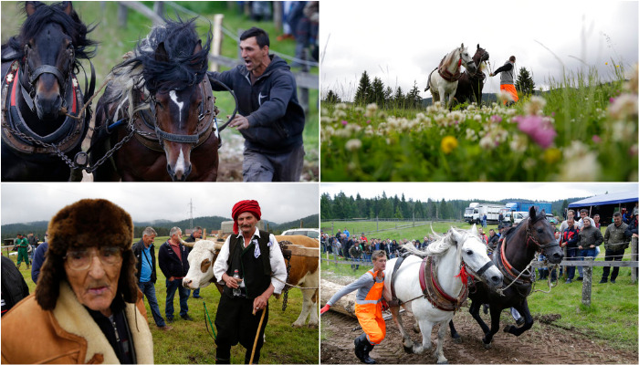The annual festival celebrates the centuries old tradition of pulling logs honoring the owners of the strongest horses. (Photo: AP)