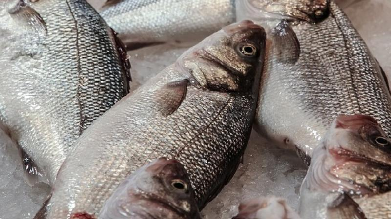 Experts discover new way to calculate toxicity in fish for Is too much fish bad for you