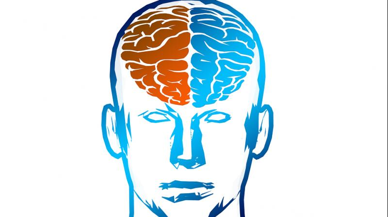 A region at the front of the brain known as the prefrontal cortex is known to play a key role in controlling our actions. (Photo: Pixabay)