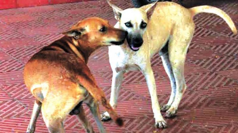 Experts question authenticity of rabies data state submitted to Centre